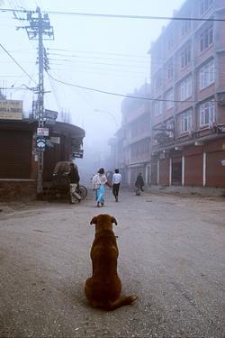 A Street Dog Watches Pedestrians on a Katmandu Street by David Edwards