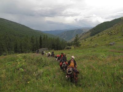 A Train of Pack Horses Trek Through Western Mongolia