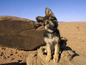 Portrait of a Puppy Next to a Rock Carved with Anasazi Petroglyphs by David Edwards