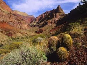 Stonecreek Canyon in the Grand Canyon on a Spring Day by David Edwards