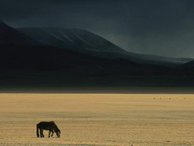 Winter Storm Rolls in over a Horse Grazing on a Mongolian Steppe