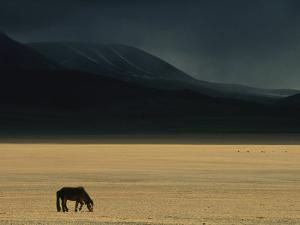 Winter Storm Rolls in over a Horse Grazing on a Mongolian Steppe by David Edwards
