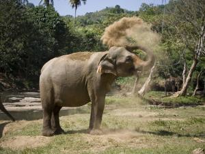 Elephant Takes a Dust Bath on the Edge of a River by David Evans