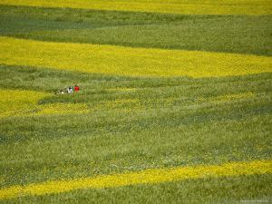 People in a Rapeseed Field, Qinghai, China by David Evans