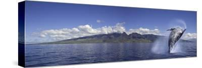 Breaching Humpback Whale (Megaptera Novaeangliae), Maui, Hawaii, USA, Digital Composite by David Fleetham