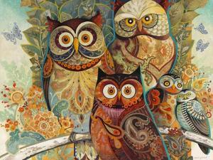 Owls by David Galchutt