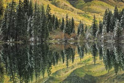 Aspen and Spruce Trees Reflect Autumn Color in Lizard Lake by David Hiser