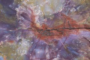 Fossil, petrified logs, have been totally replaced by quartz, Arizona by David Hosking