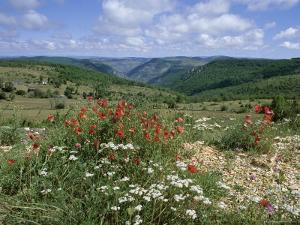Causse Mejean, Gorges Du Tarn Behind, Lozere, Languedoc-Roussillon, France by David Hughes