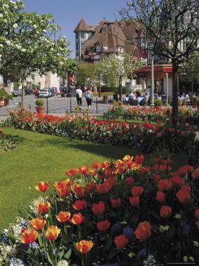 Flower Beds with Tulips in Town Centre, Deauville, Calvados, Normandy, France by David Hughes