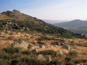 Mont Lozere, Near Finiels, Cevennes National Park, Lozere, Languedoc-Roussillon, France by David Hughes