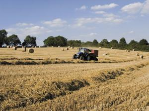 Tractor Harvesting Near Chipping Campden, Along the Cotswolds Way Footpath, the Cotswolds, England by David Hughes