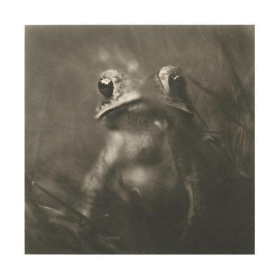 Frog by David Johndrow