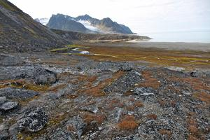 Glacial Foreshore, Magdalenefjord, Svalbard Looking West by David Lomax