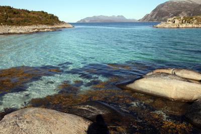 Rock and Weed in Harbour at Gasvaer, Kvalfjord, Troms, North Norway, Norway, Scandinavia, Europe by David Lomax
