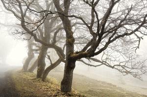 Early Morning Calm by David Lorenz Winston