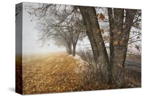 Fall to Winter by David Lorenz Winston