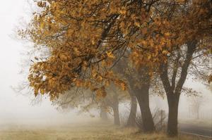 Fog in Fall by David Lorenz Winston