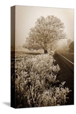 Frosted Oak & Road by David Lorenz Winston