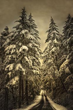 Wagner Creek Snow by David Lorenz Winston