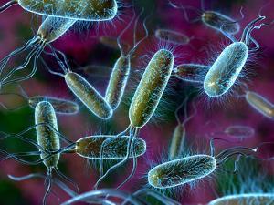 E. Coli Bacteria by David Mack