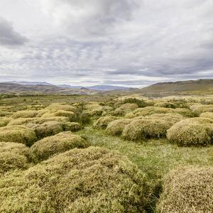 Pre-Andean Shrub Land. by David Madison