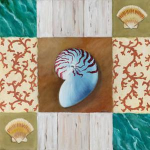 Shell Collage III by David Marrocco