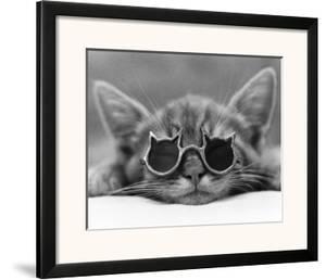 Kool Kat I by David Mcenery
