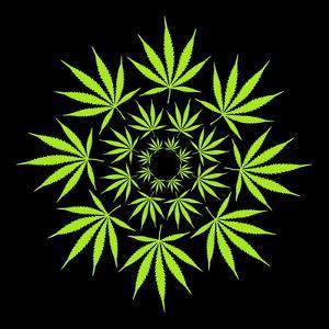 Cannabis Leaves by David Nicholls