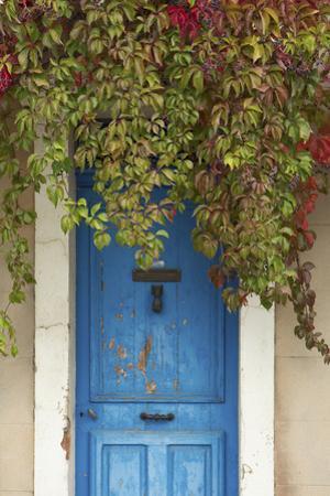 Blue Doorway with Grape Vines (Vitis) Puyloubier, Var, Provence, France, October 2012