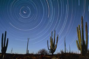 Star Trails Over Cacti by David Nunuk