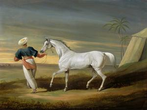 Signal, a Grey Arab, with a Groom in the Desert (Oil on Panel) by David of York Dalby