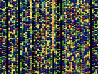 Computer Screen Showing a Human Genetic Sequence by David Parker