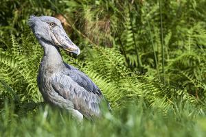 Mute swan family, Valkenswaard, the Netherlands by David Pattyn