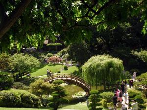 Japanese Garden, Huntington Museum and Gardens, Pasadena by David Peevers