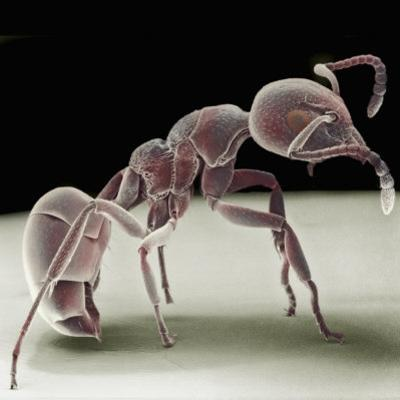 Side View of an Ant by David Phillips