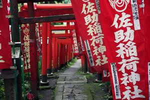 Alley in the Kamakura hills, Honshu, Japan, Asia by David Pickford