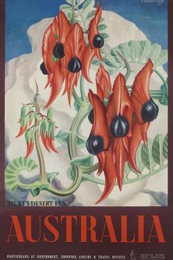 Australia Travel Poster Sturt's Desert Peas by David Pollack