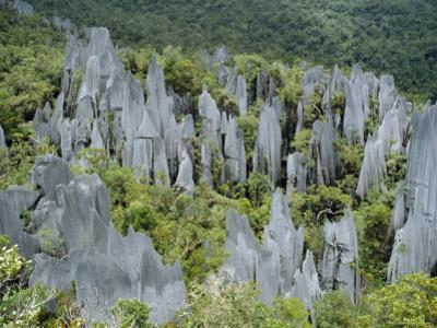 Limestone Pinnacles on Mount Api, Gunung Mulu National Park, Sarawak, Island of Borneo, Malaysia by David Poole