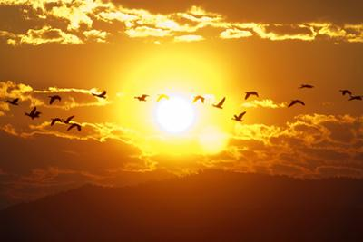 A Flock of Geese Fly at Sunrise in Boise, Idaho, USA