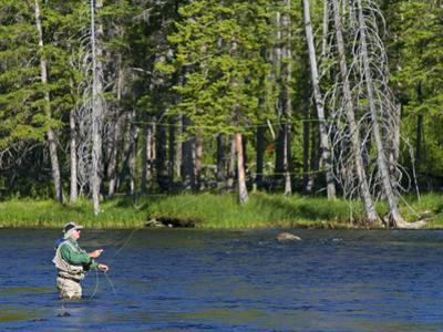 Fly Fishing the Madison River in Yellowstone National Park, Montana, Usa