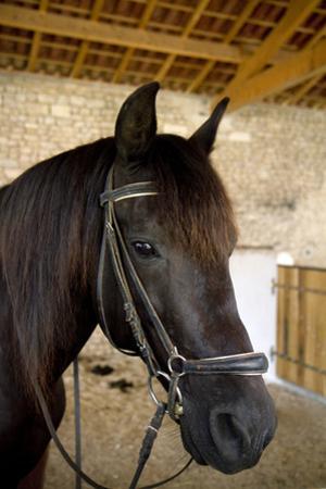 Horse on a Farm Near Angouleme in Southwestern France