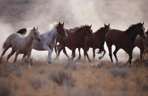 Grassland Herd by David R. Stoecklein