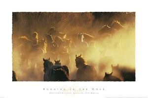 Running in the Gold by David R. Stoecklein