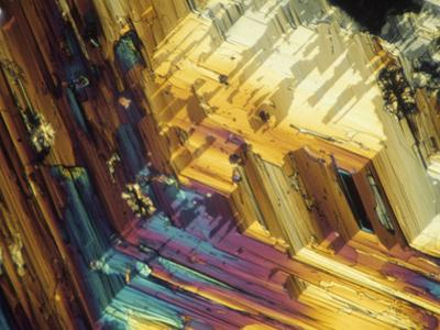 Polarized View of Inositol Crystals, LM