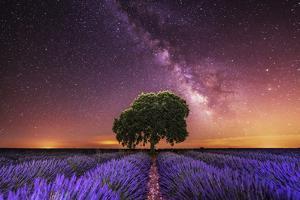 Milky Way over a lavender field in Guadalajara province, Spain, Europe by David Rocaberti