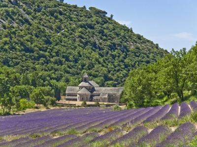 Lavender Fields and Senanque Monastery