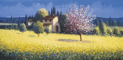 Spring Blossoms by David Short