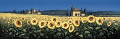 Tuscan Panorama, Sunflowers by David Short