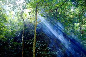 Asia, Indonesia, Sulawesi. Sunburst Lights Up a Steamy Rainforest by David Slater